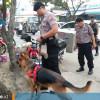 Pembongkaran Makam Yusuf hingga Anjing Pelacak Menuju Parit di Depan PAUD