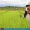 Melihat Sektor Pertanian yang Semakin Menopang Ekonomi Kukar