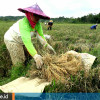 Mempertahankan Lumbung Pangan di Kukar setelah Ditunjuk sebagai Ibu Kota Negara