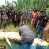 Runtun Perkara Anak Delapan Tahun Diterkam hingga Ditemukan di Perut Buaya di Bengalon, Kutai Timur