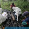 Bayi Pesut Mahakam Kembali Ditemukan Mati di Kukar, Sudah Keenam Kalinya dalam Setahun