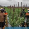 Kembangkan Lima Kawasan Pertanian Terpadu, Kukar Bangun 120 Embung dan 120 Km Jalan Usaha Tani